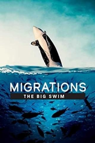 فيلم Migrations: The Big Swim 2020 مترجم