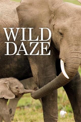 فيلم Wild Daze 2020 مترجم