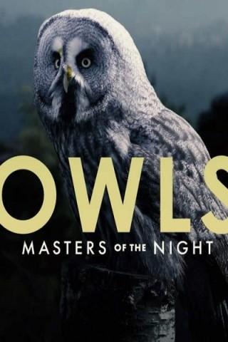فيلم Owls: Masters of the Night 2020 مترجم
