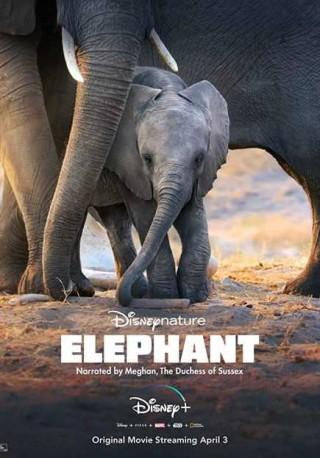 فيلم Elephant 2020 مترجم